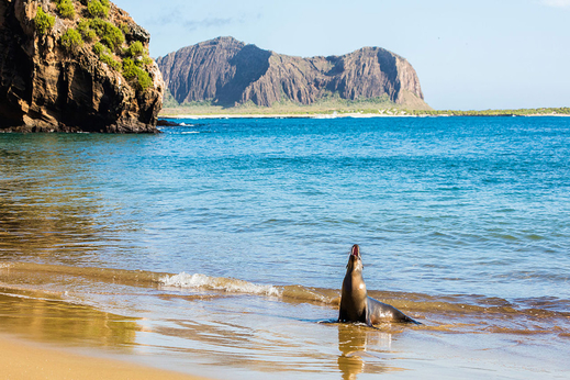 Ile San Cristobal/Galapagos