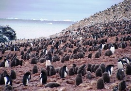 Iles Shetland Sud