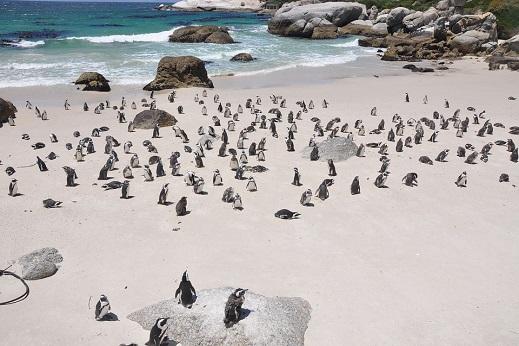 Isla de los Pinguinos