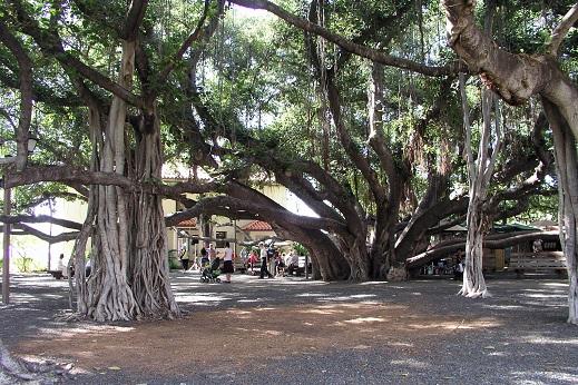 Lahaina - Maui/Hawaï
