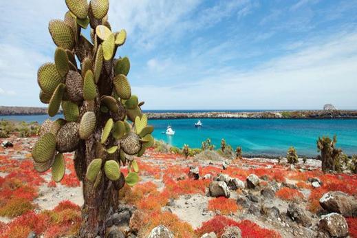 Plazas Sur/Galapagos