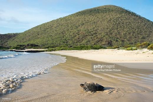 Punta Cormorant - Floreana - Galapagos