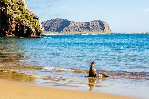 Punta Pitt - San cristobal - Galapagos