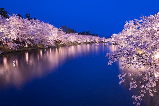 Un fleuve bordé de cerisiers en fleurs.